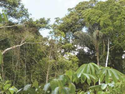 Regenwald in Peru