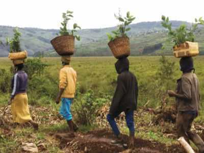 Sumpfgebiet Ruanda