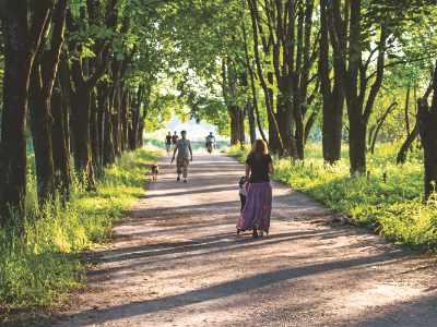 Grüne Alleen in Lukavac