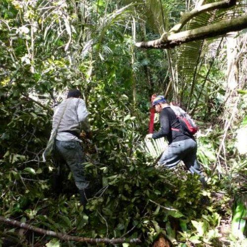 Arbeit an einer Schneise zur Abgrenzung eines Regenwald-Grundstückes (Bildrechte GLS Zukunftsstiftung Entwicklung)