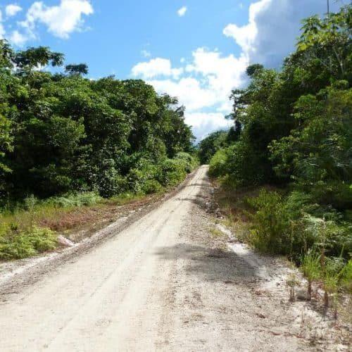 Weg zum Regenwald im Hinterland von Tamshiyacu (Bildrechte GLS Zukunftsstiftung Entwicklung)